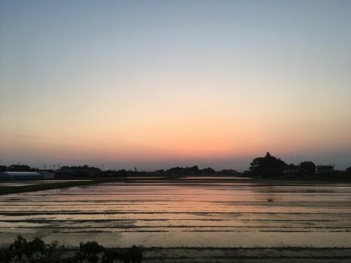 羽生市の絶景 今日の夕焼け